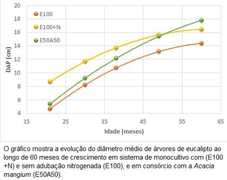 http://www.diadecampo.com.br/arquivos/image_bank/especiais/eucalipto10_dentro_2017620101236.jpg